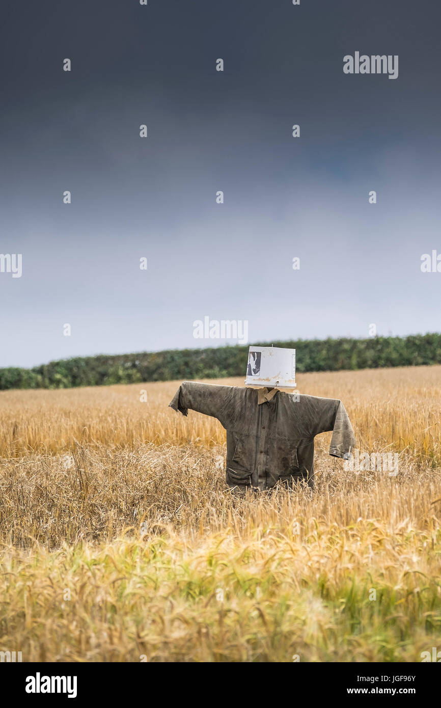 A scarecrow in a field. - Stock Image