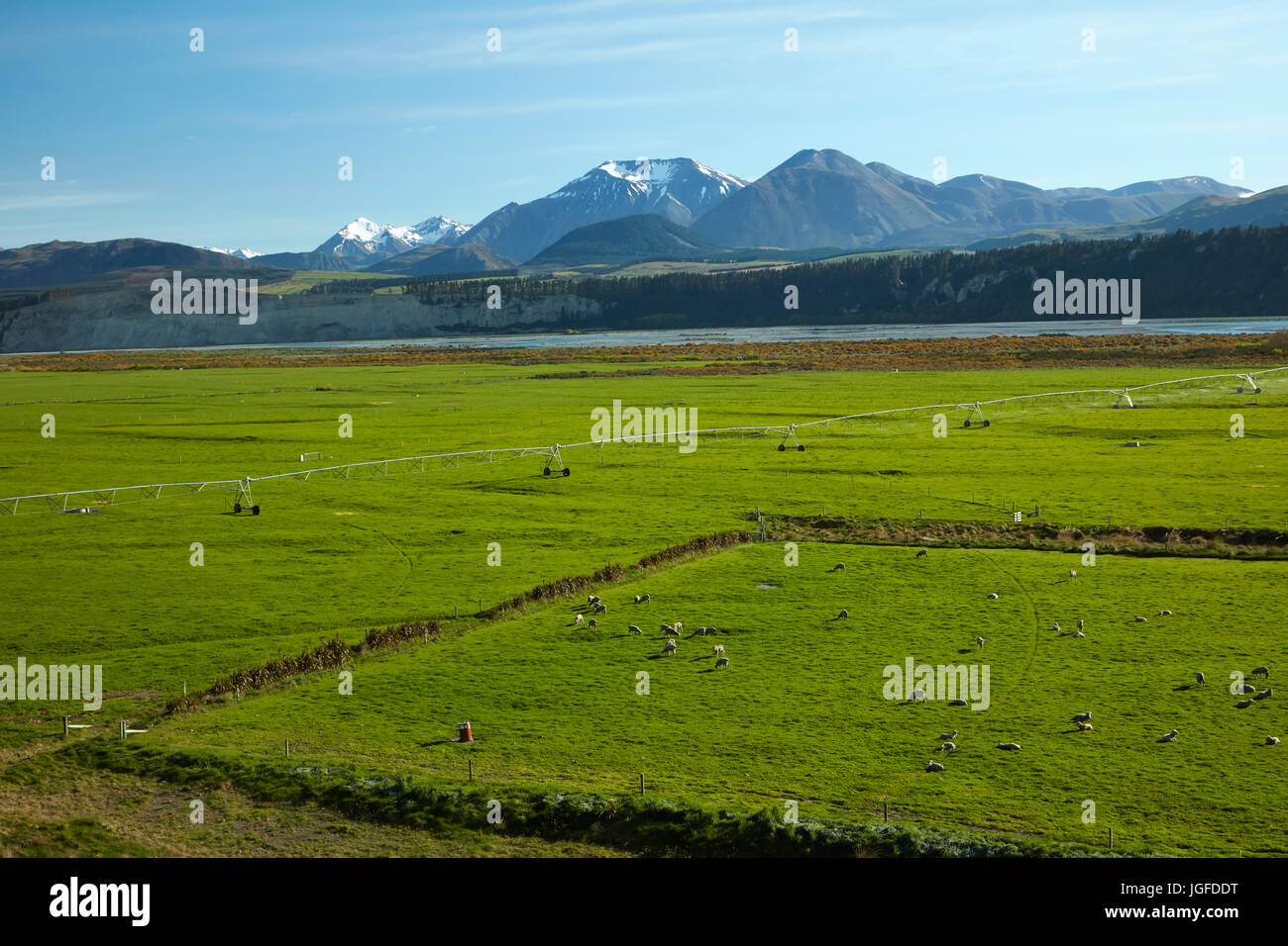 Sheep and farmland and Upper Rakaia River, Mid Canterbury, South Island, New Zealand - Stock Image