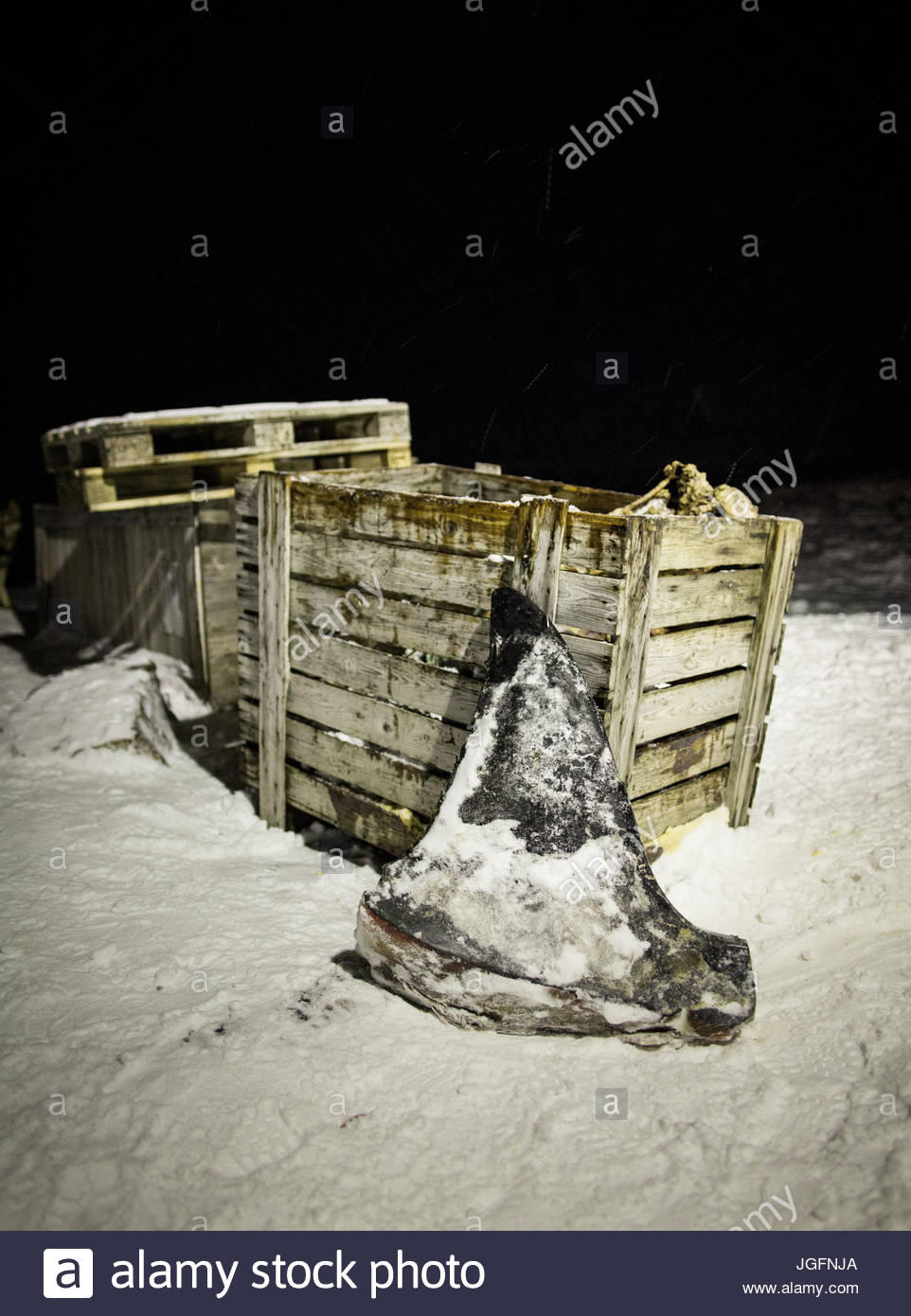 The dorsal fin of a killer whale, used as food for sled dogs and humans alike, is left outside the Inuit settlement Stock Photo