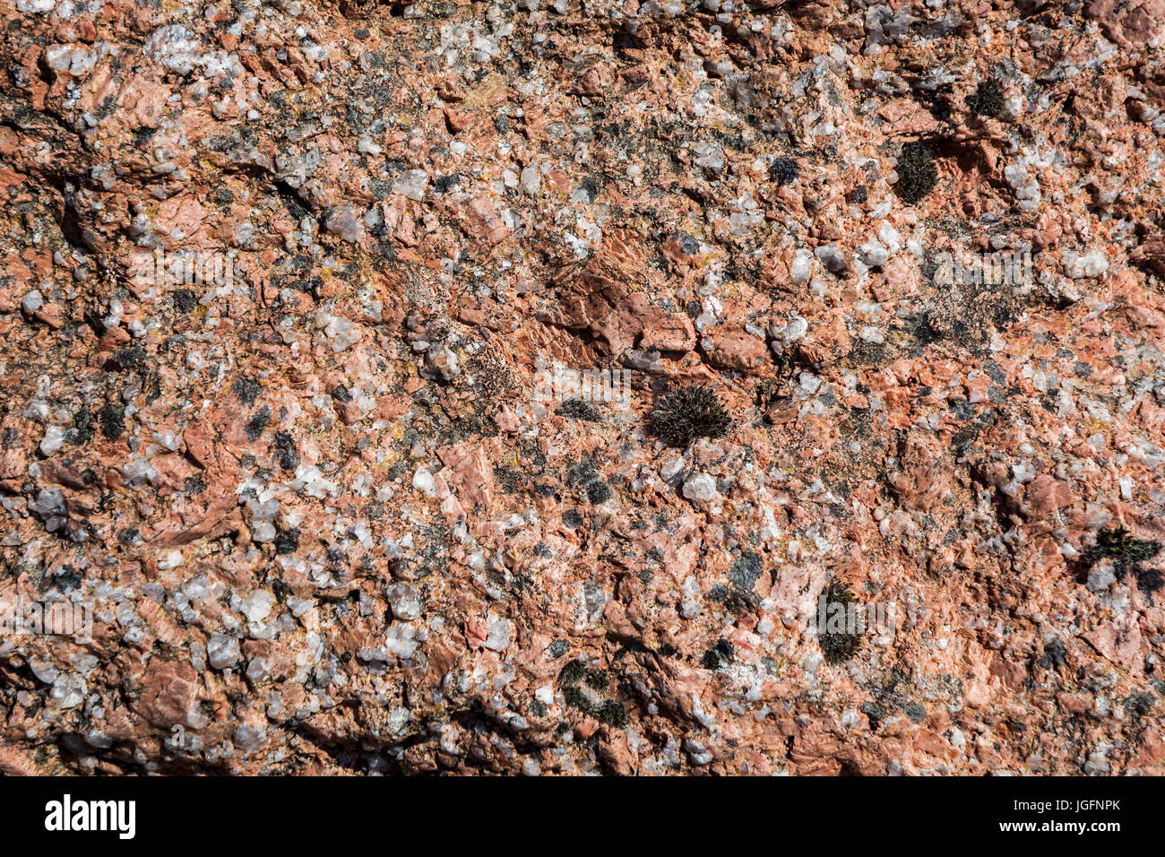 Red granite, close up of igneous rock showing grain structure and texture - Stock Image