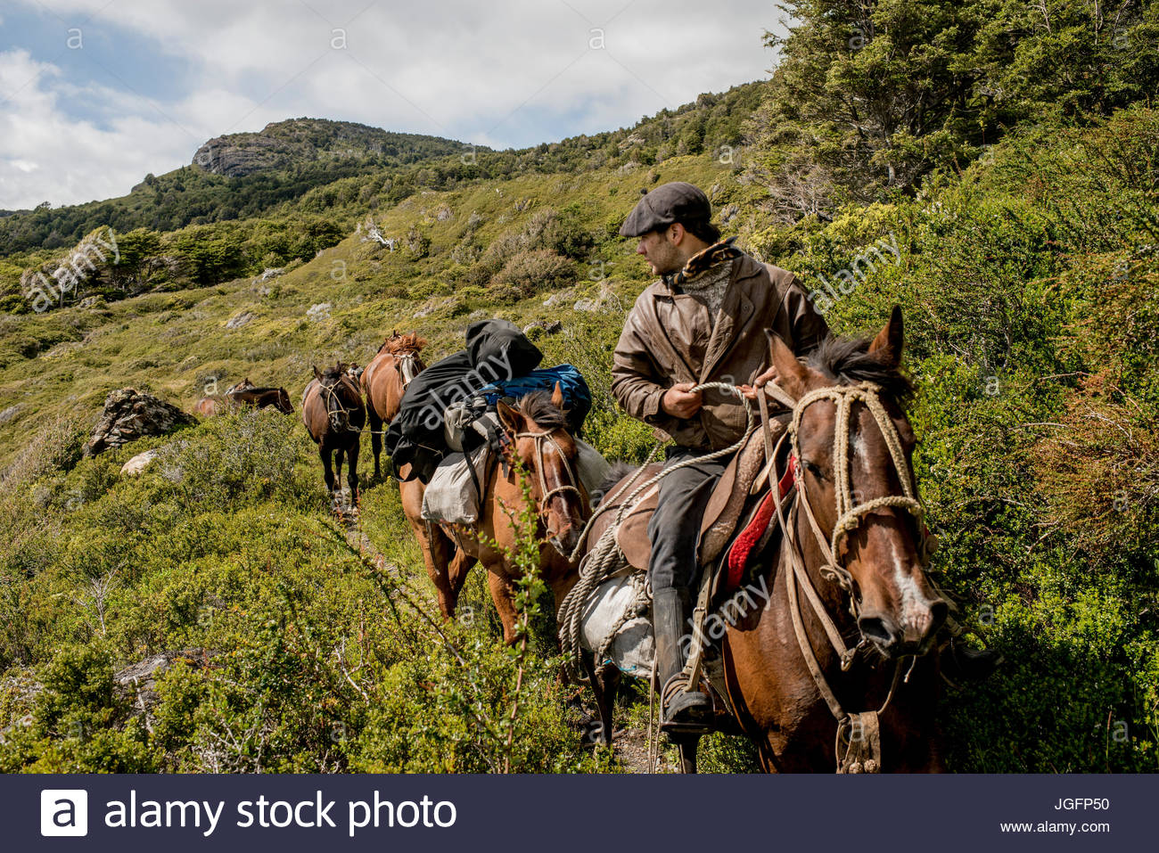 A bagualero, or cowboy who captures feral livestock, brings horses to a ranch. - Stock Image
