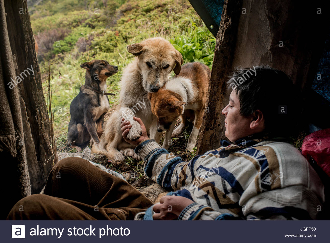 A bagualero, a cowboy who capture feral livestock, shakes hands with a working dog. - Stock Image