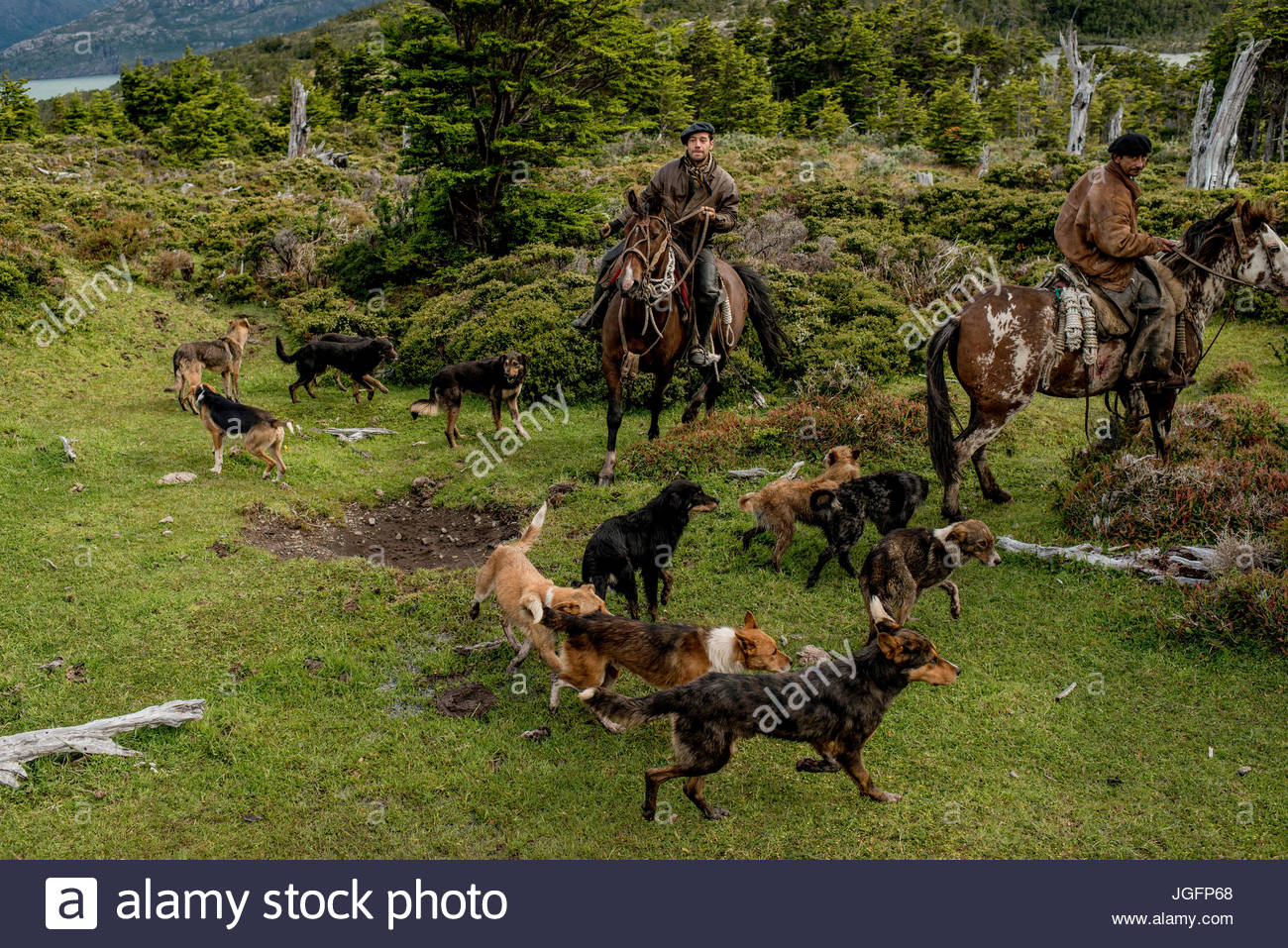 Bagualeros, cowboys who capture feral livestock, on an expedition with their dogs. Stock Photo