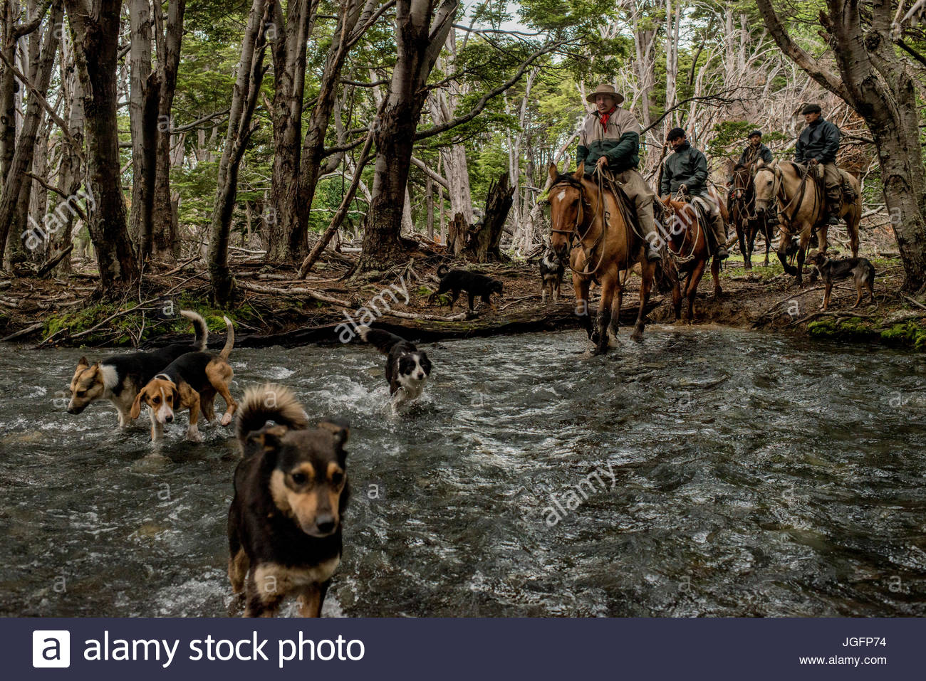 Bagualeros, cowboys who capture feral livestock, cross a river in Sutherland while looking for animals. - Stock Image