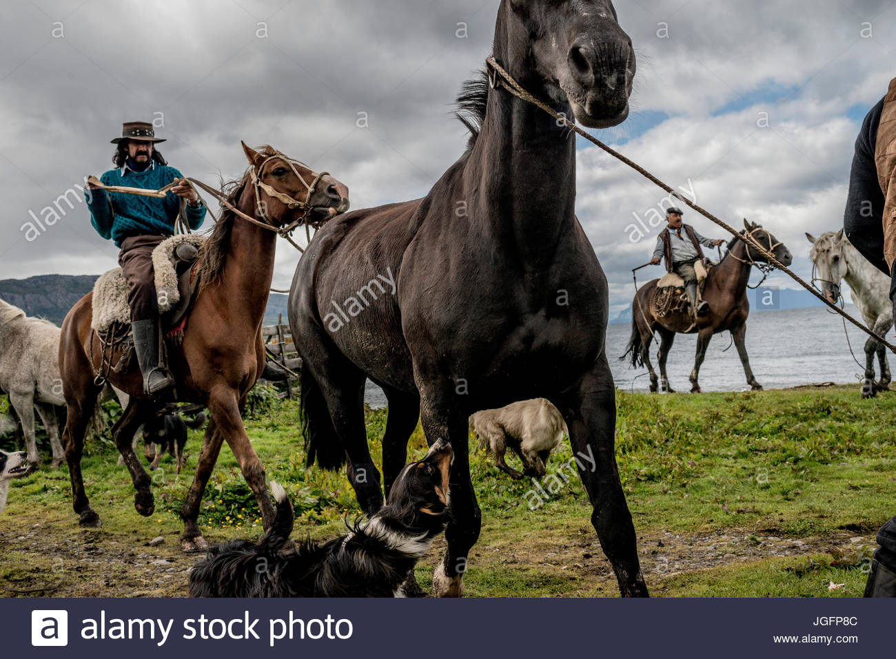 Bagualeros, or cowboys who capture feral livestock, herd horses for branding at a ranch. Stock Photo