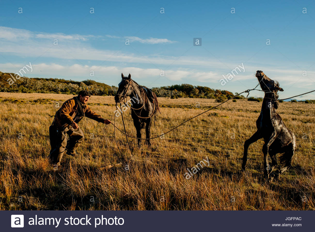 A bagualero, a cowboy who captures feral livestock, tries to take his boleadora, a throwing device with weights - Stock Image