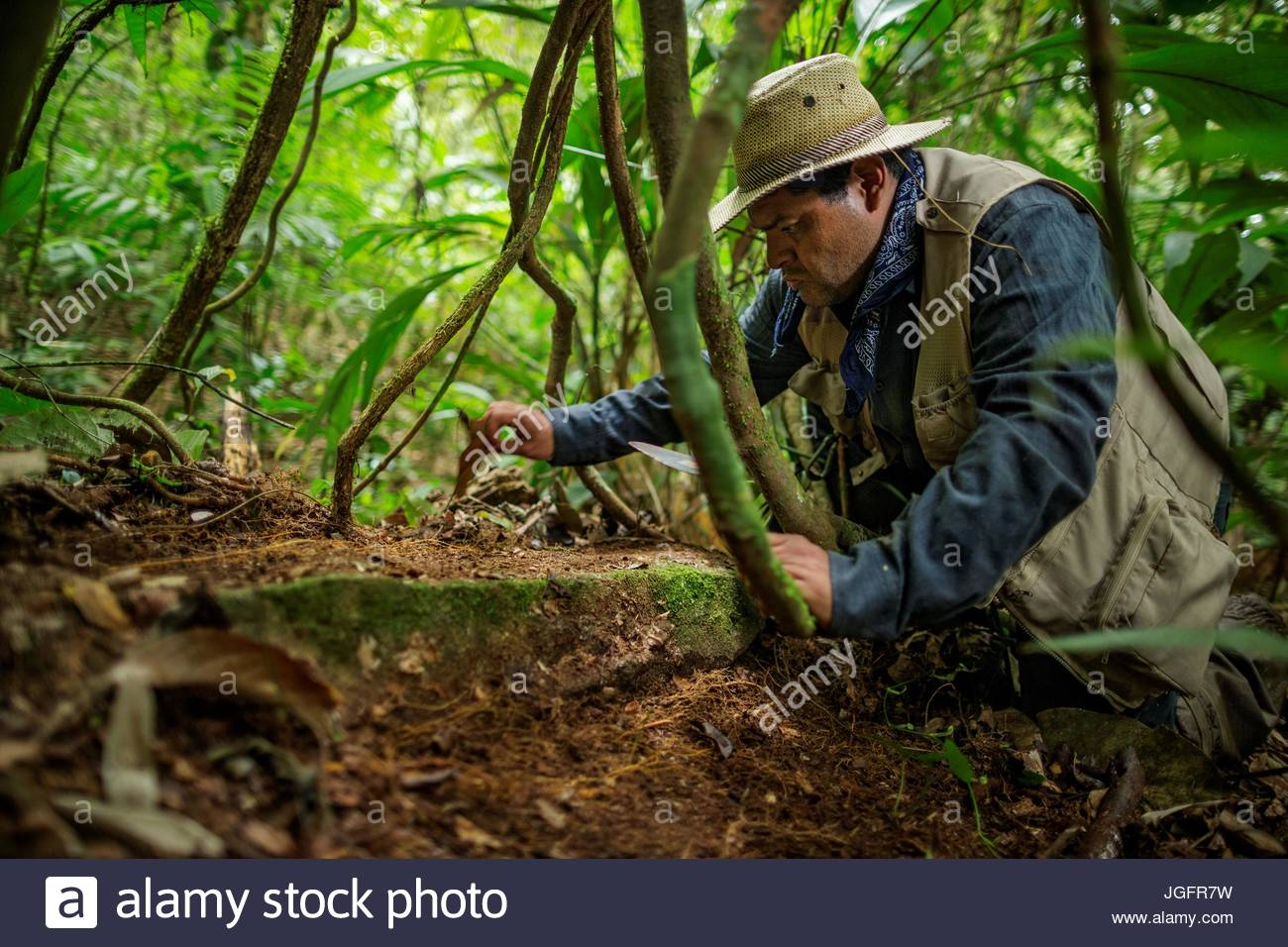 An archaeologist brushes forest litter from a stone upon entering the pre-Colombian ruins of a lost city in Mosquitia. - Stock Image