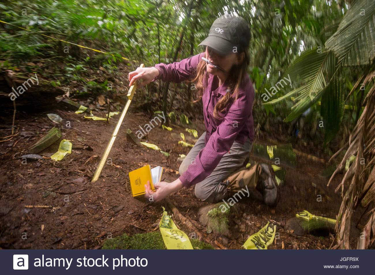 An anthropology grad student documents a cache of more than 50 artifacts discovered in the jungle. - Stock Image