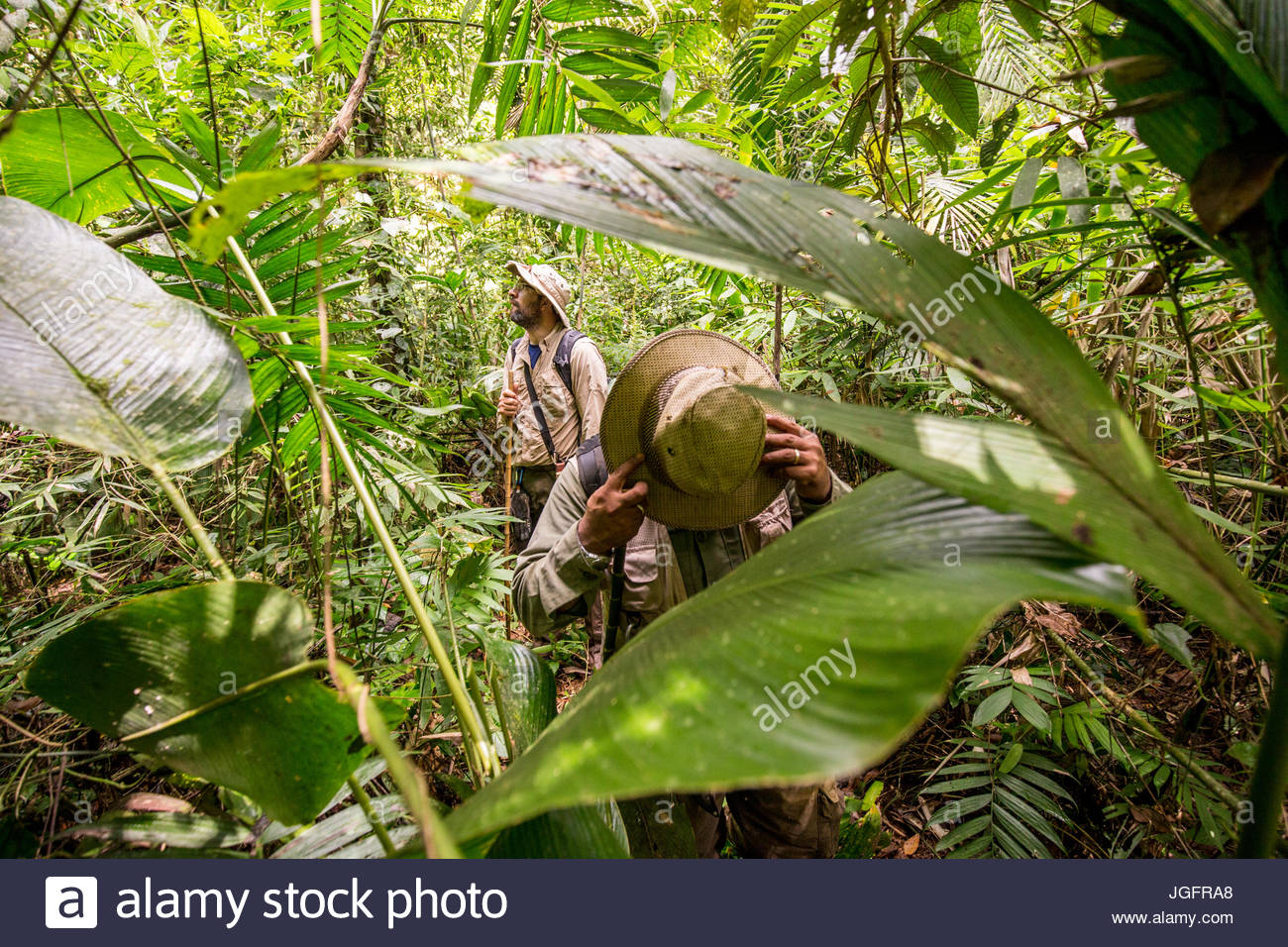 Scientists on an expedition to explore the ruins of a pre-Colombian city in the Mosquitia jungle. - Stock Image