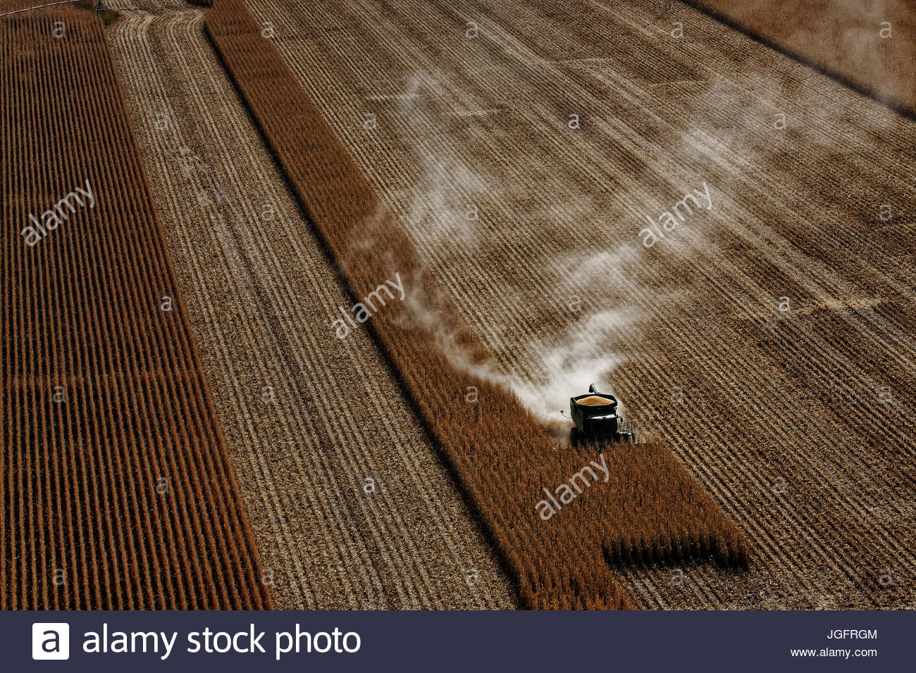 A harvester works a wheat field between two feedlots. - Stock Image