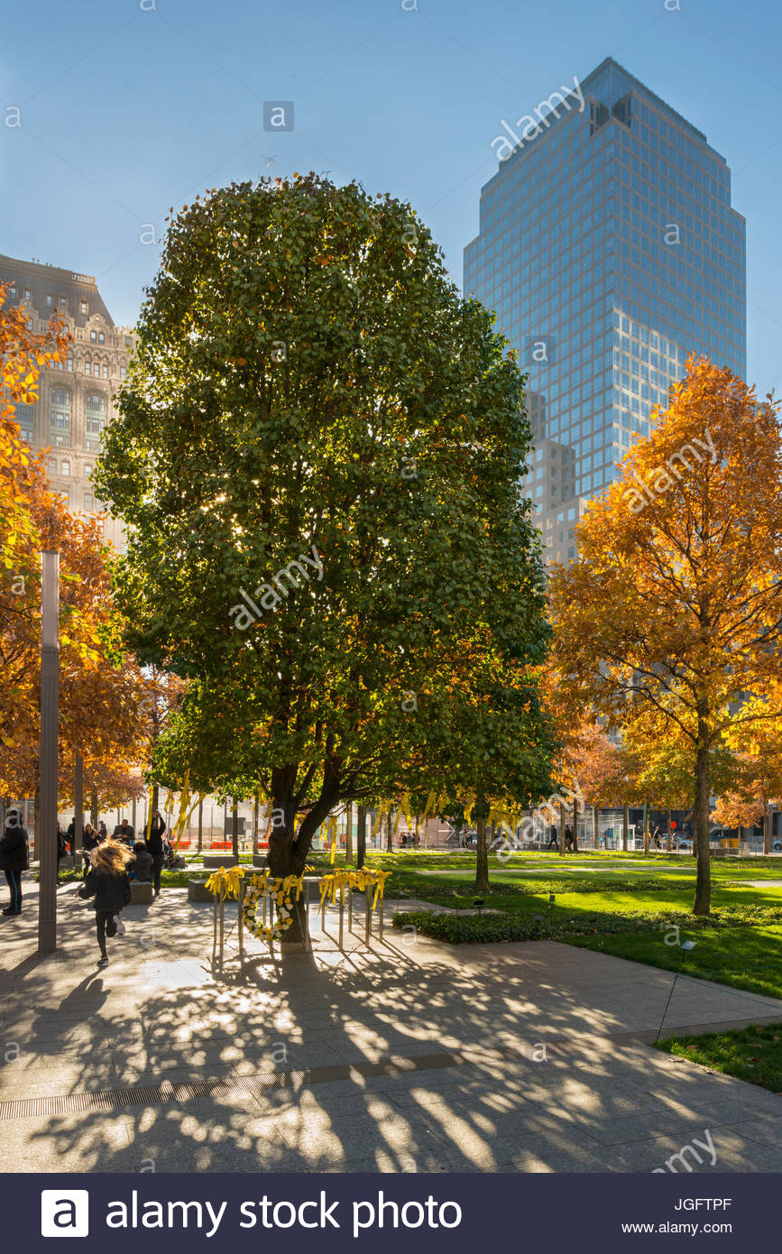 A resilient Callery pear tree, that survived September 11, grows at the National September 11 Memorial and Museum - Stock Image