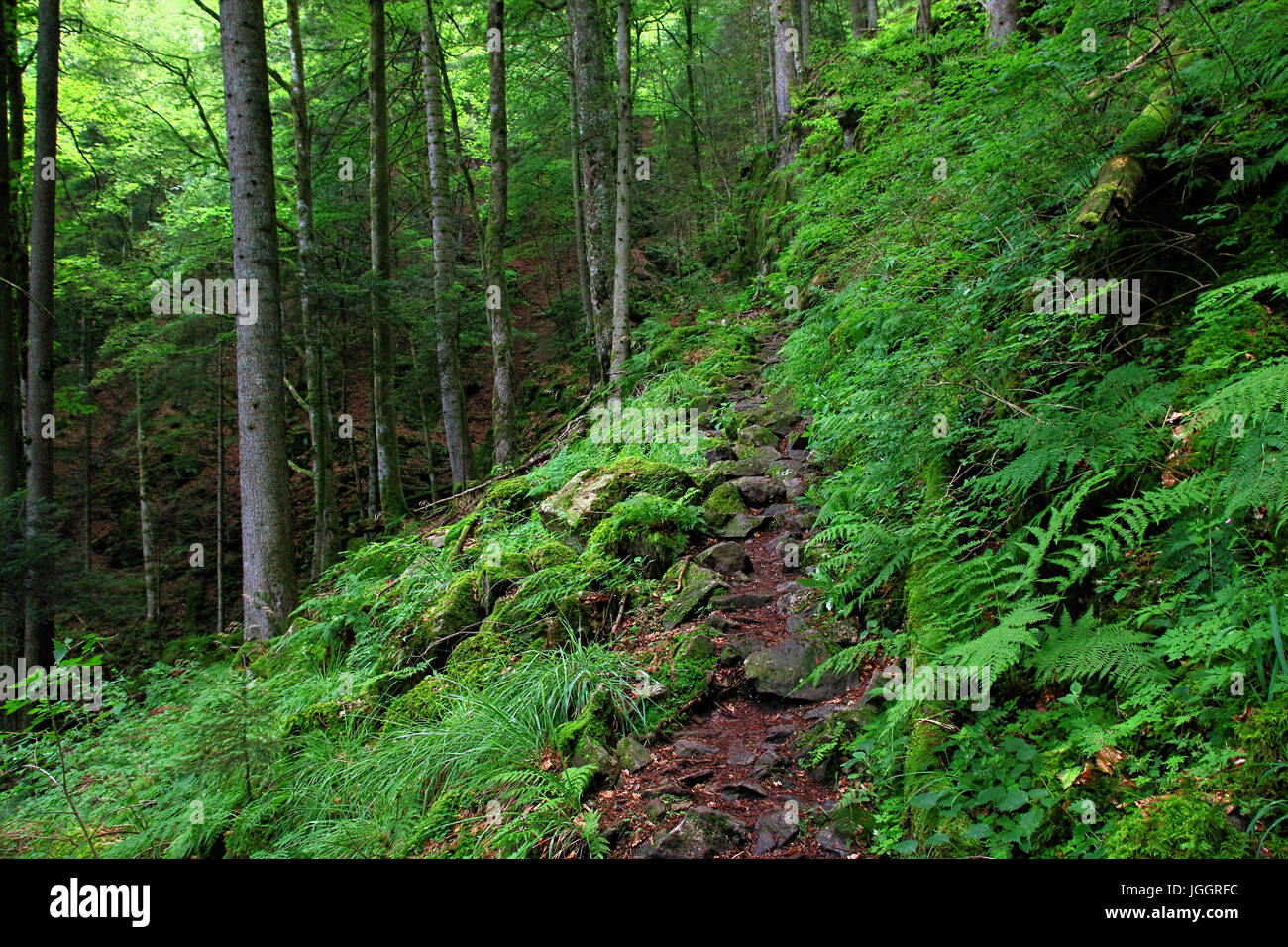 Black Forest hiking trail through the Wutachschlucht, Germany - Stock Image