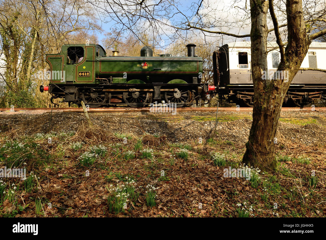 Snowdrops are in bloom beside the South Devon Railway as GWR 0-6-0 pannier tank No 6412 passes by, running bunker Stock Photo