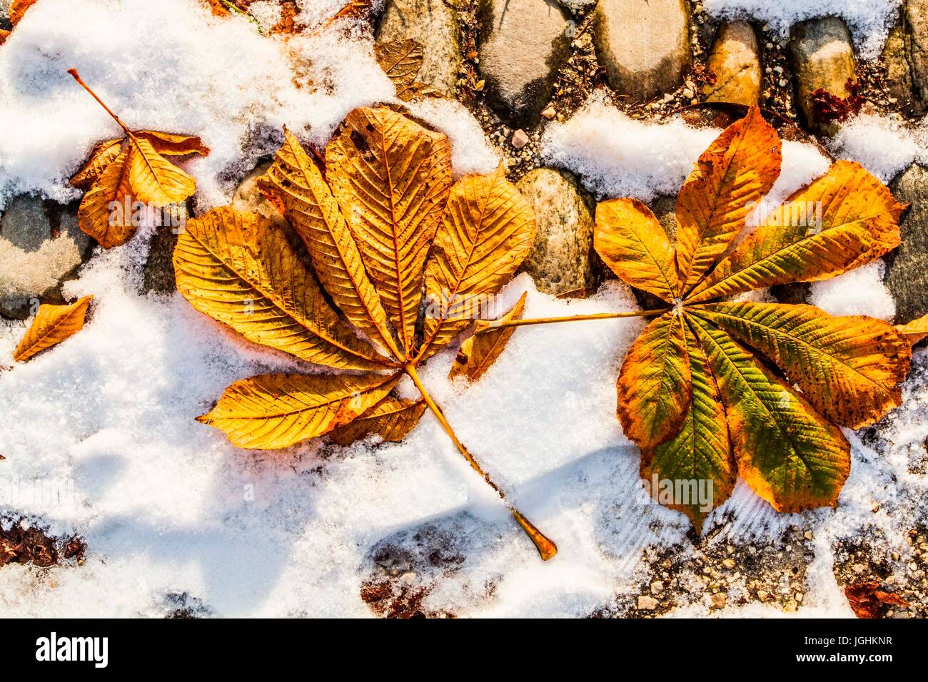Leaves on the ground in Simplon Park (Parco Sempione) at winter. Milan, Province of Milan, Italy. 08.12.12 - Stock Image