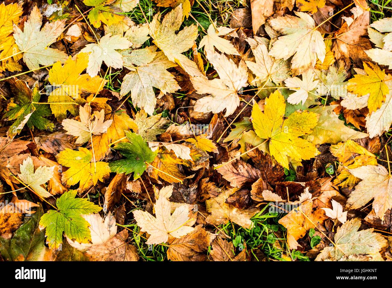 Leaves on the ground in Simplon Park (Parco Sempione) at winter. Milan, Province of Milan, Italy. 08.12.2012 - Stock Image