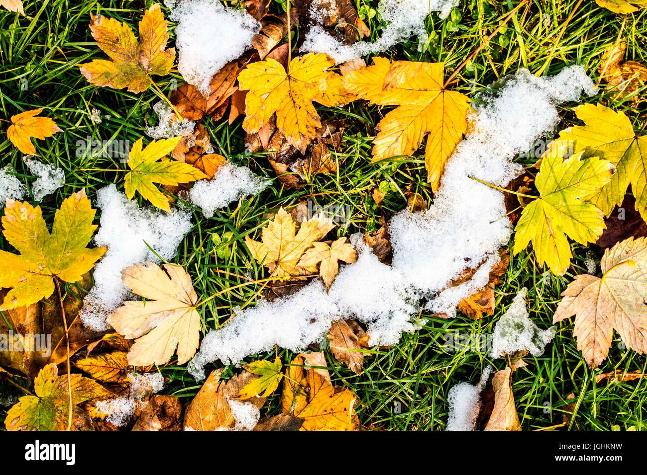 Leaves on the ground in Simplon Park (Parco Sempione) at winter. Milan, Province of Milan, Italy. - Stock Image