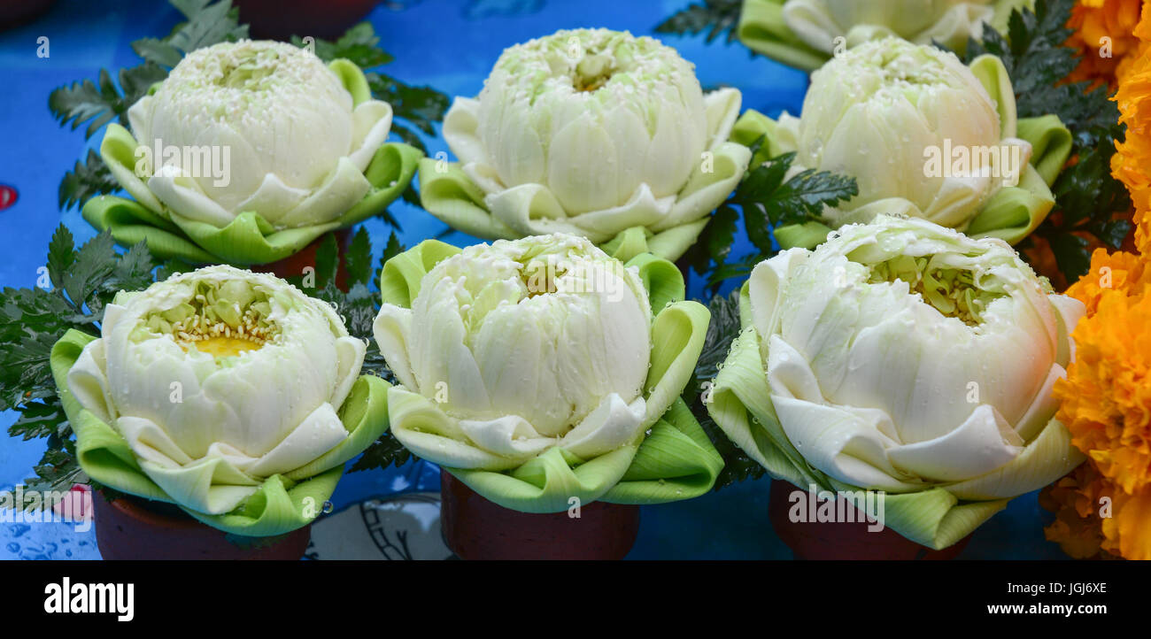 White Lotus Flower At Thai Temple In Bangkok Thailand Stock Photo