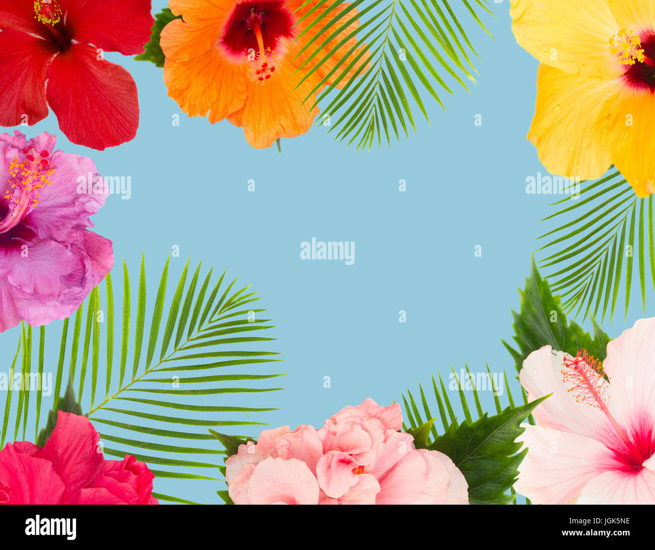 Tropical Fresh Flowers And Leaves Frame Of Fresh Multicilored