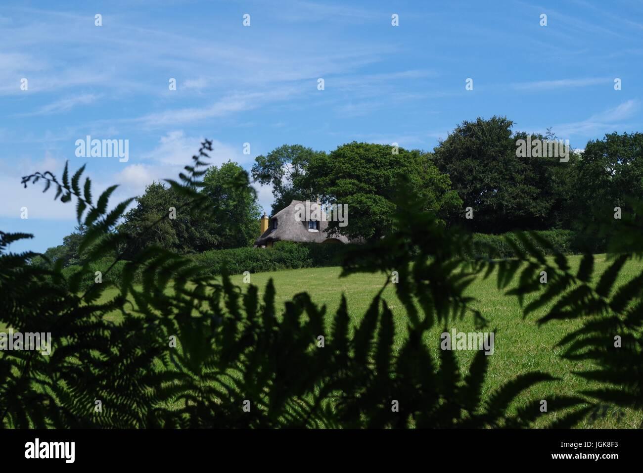 Tumbly Cottage, Holne. Dartmoor National Park, Devon, UK. July, 2017. - Stock Image