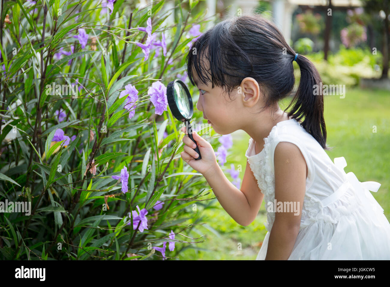 Asian Chinese little girl looking at flower through a magnifying glass in outdoor garden - Stock Image