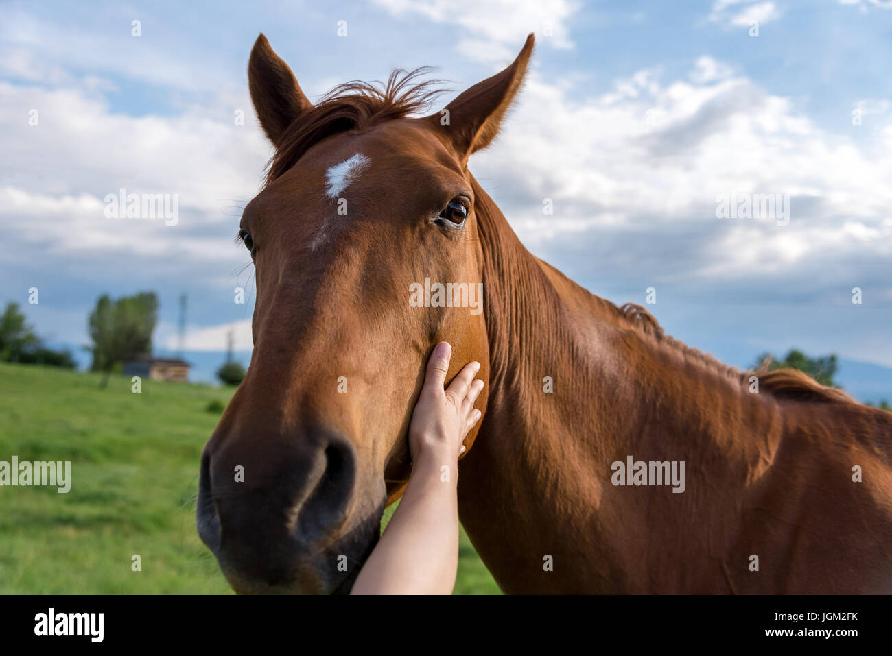 The hand of a woman is stroking a horse at sunset - Stock Image
