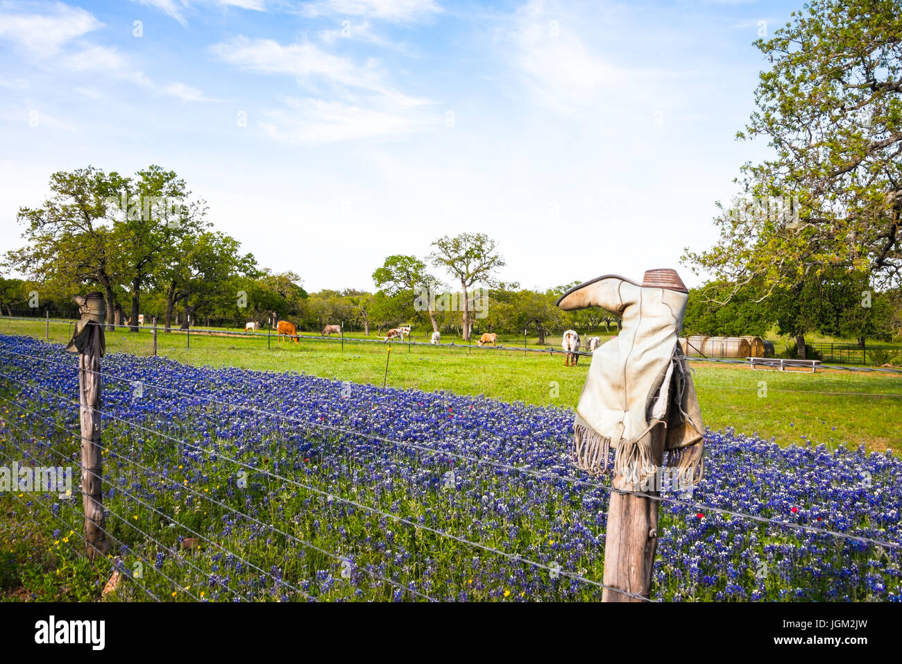 09a91785274d Broken Boots on Fence Posts on Texas Hill Country Ranch with Bluebonnets  and Longhorn Cattle