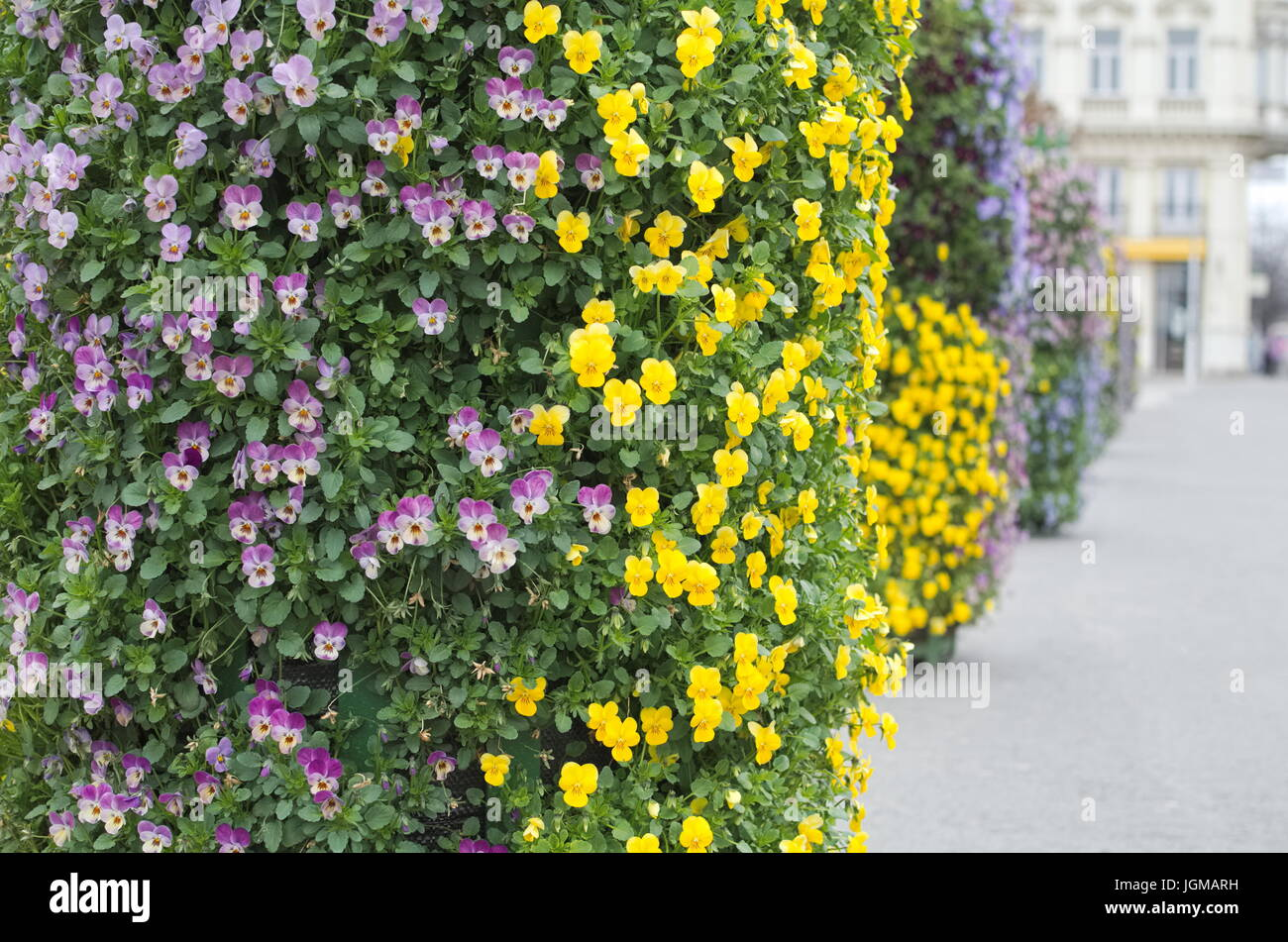 Small purple flowers with yellow centre stock photos small purple bush of small purple and yellow street flowers stock image mightylinksfo