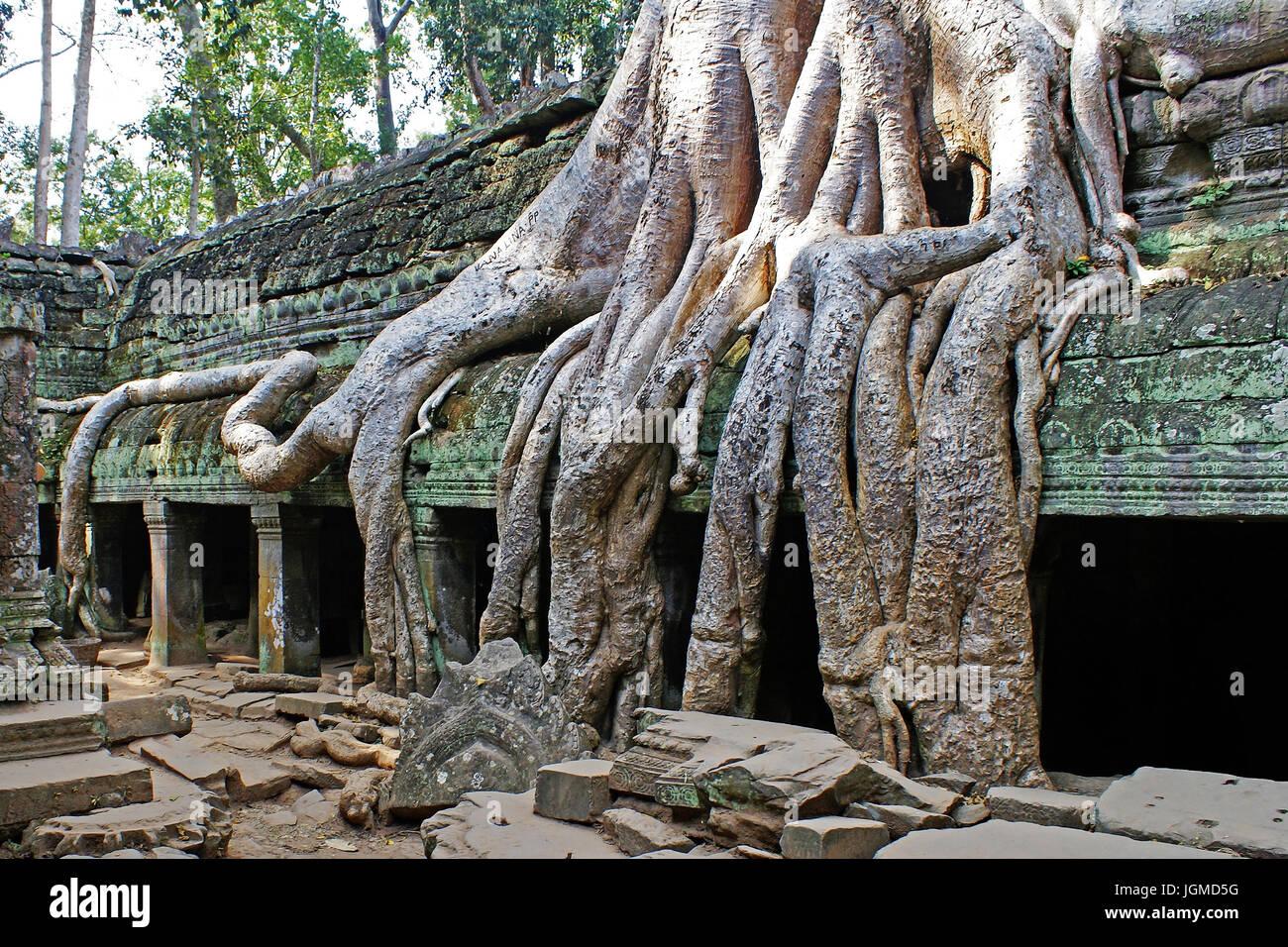 Tree roots uberwuchern old temple arrangement in Cambodia, Baumwurzeln uberwuchern alte Tempelanlage in Kambodscha Stock Photo