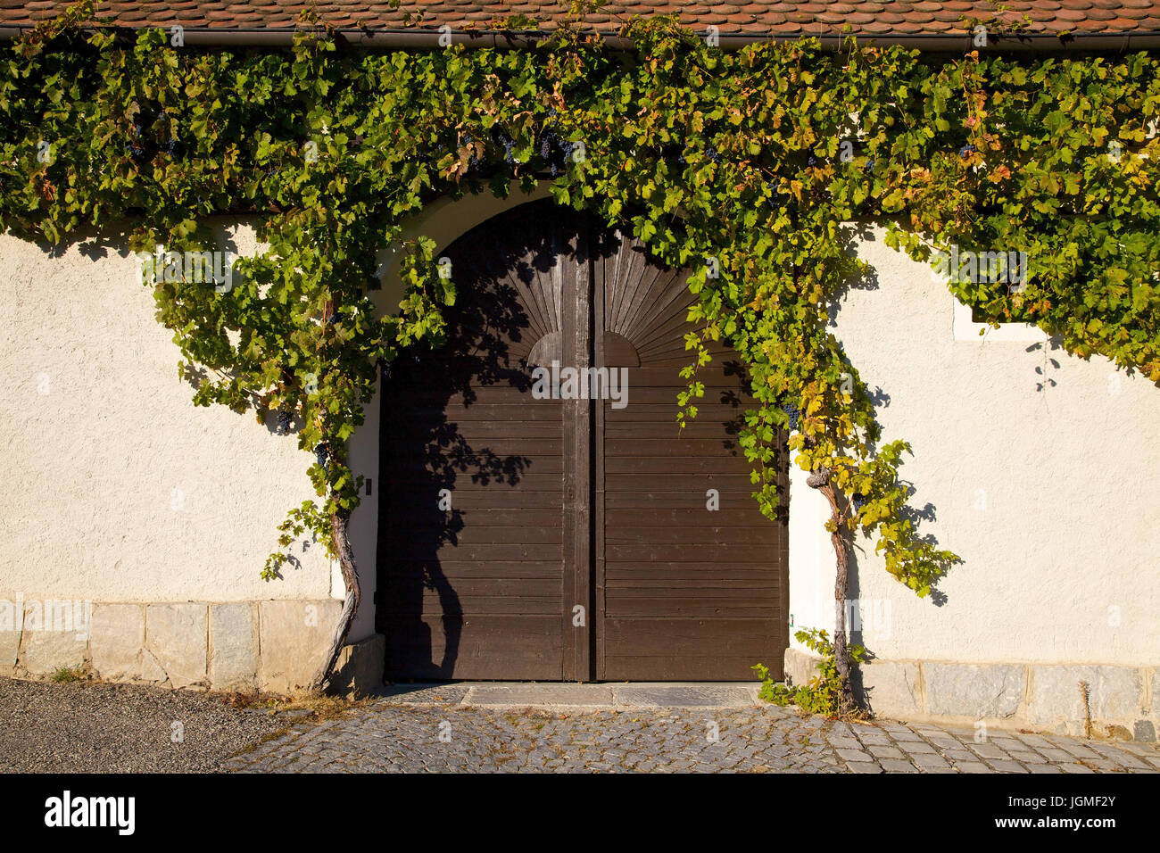 With wine umranktes court gate in spitz / the Danube, Austria, Lower Austria, Wachau - yard gate in spitz / the Danube, Austria, Lower Austria, Wachau Stock Photo