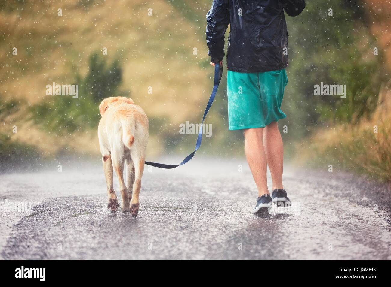 Young man running with his dog (labrador retriever) in heavy rain on the rural road. - Stock Image