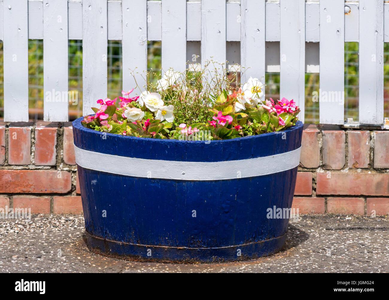 Close up of flower barrel, Drem train station platform filled with summer flowers next to white picket fence, East - Stock Image