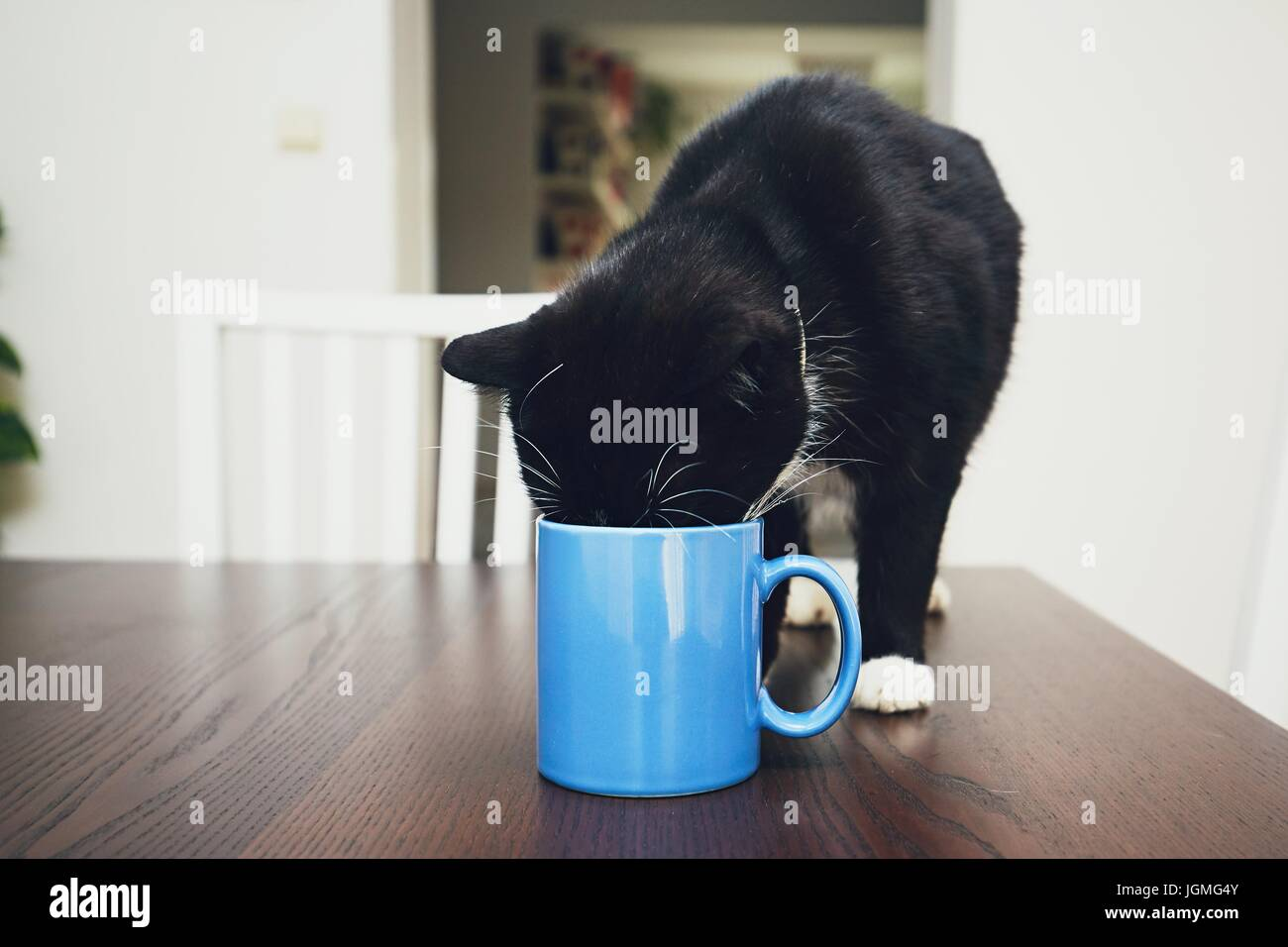 Cat Drink Milk High Resolution Stock Photography And Images Alamy