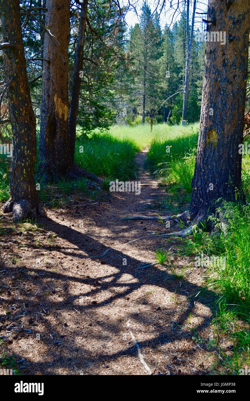 Forest path, Truckee, Ca;ifornia - Stock Image