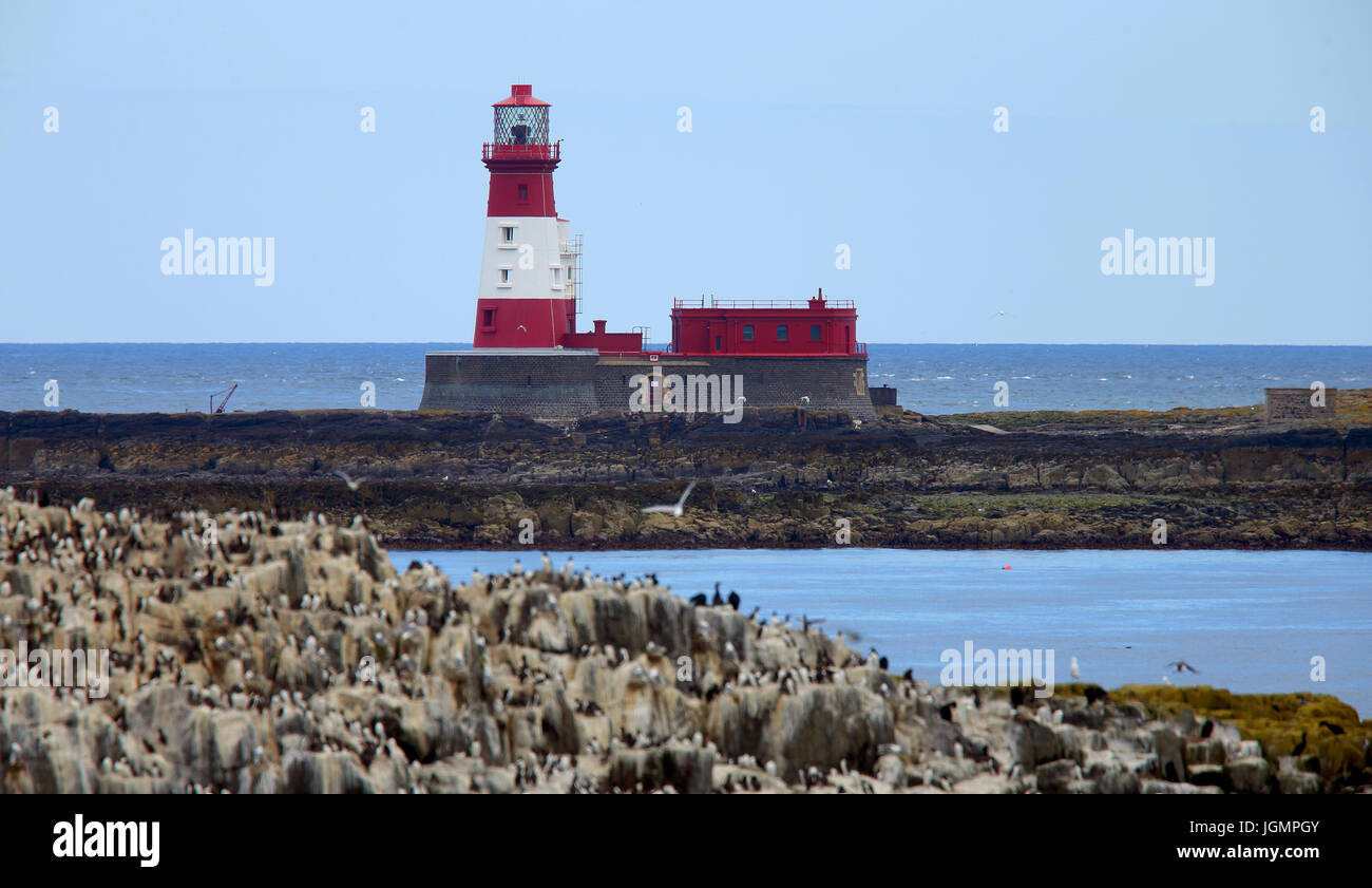 Longstone Lighthouse (made famous by Grace Darling), Farne Islands, Northumbria, England, UK. Stock Photo