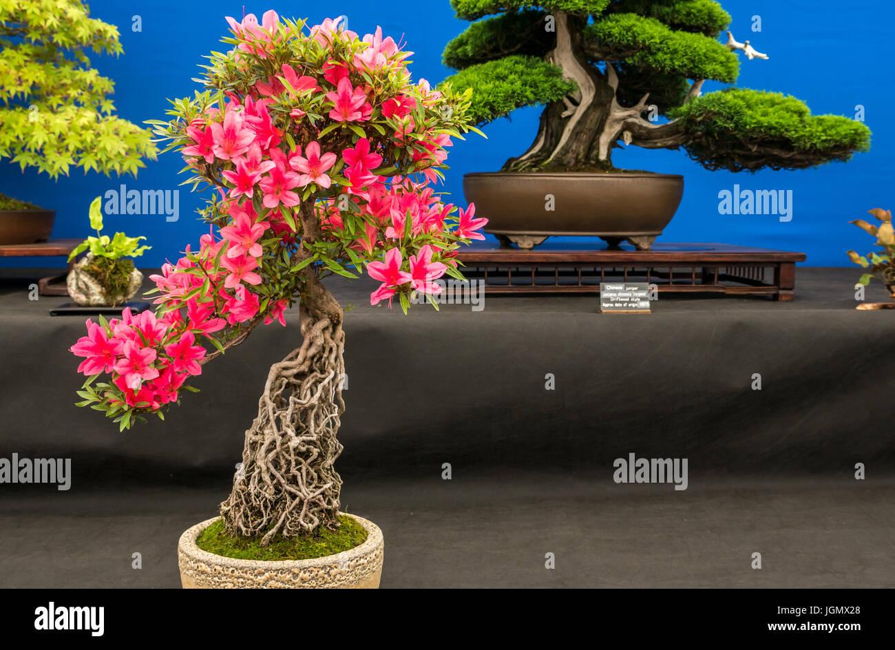 Bonsai exhibit stock photos bonsai exhibit stock images - Chicago flower and garden show 2017 ...