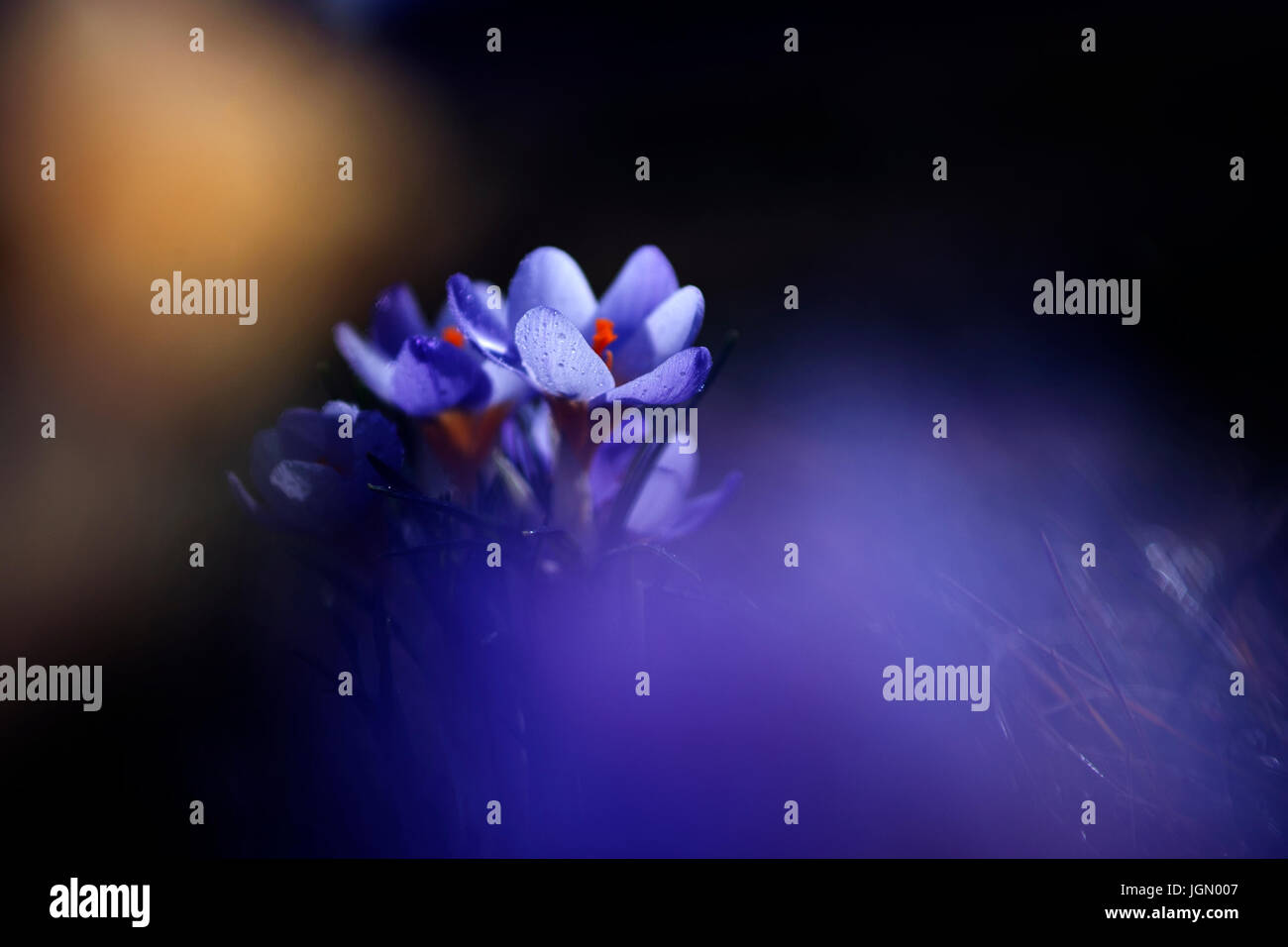 Creative artistic flower photo in sunset - Stock Image