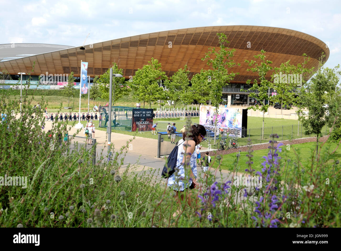 Wild flowers bloom in June garden near the Queen Elizabeth Olympic Park Velodrome in Stratford Borough of Newham - Stock Image
