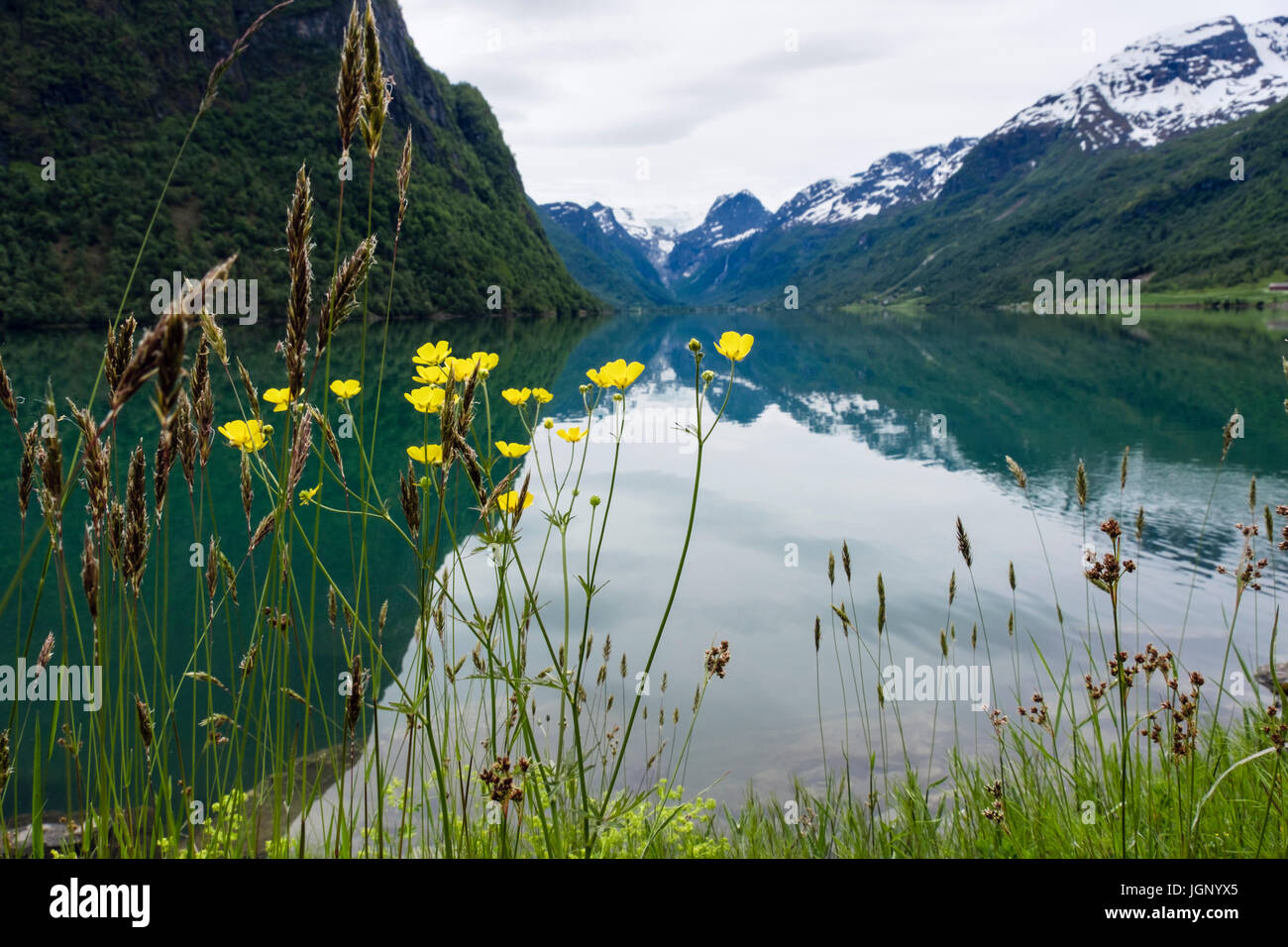 Reflections in Oldevatnet lake with Buttercups and grasses growing on the shore. Olden, Oldedalen valley, Sogn og - Stock Image