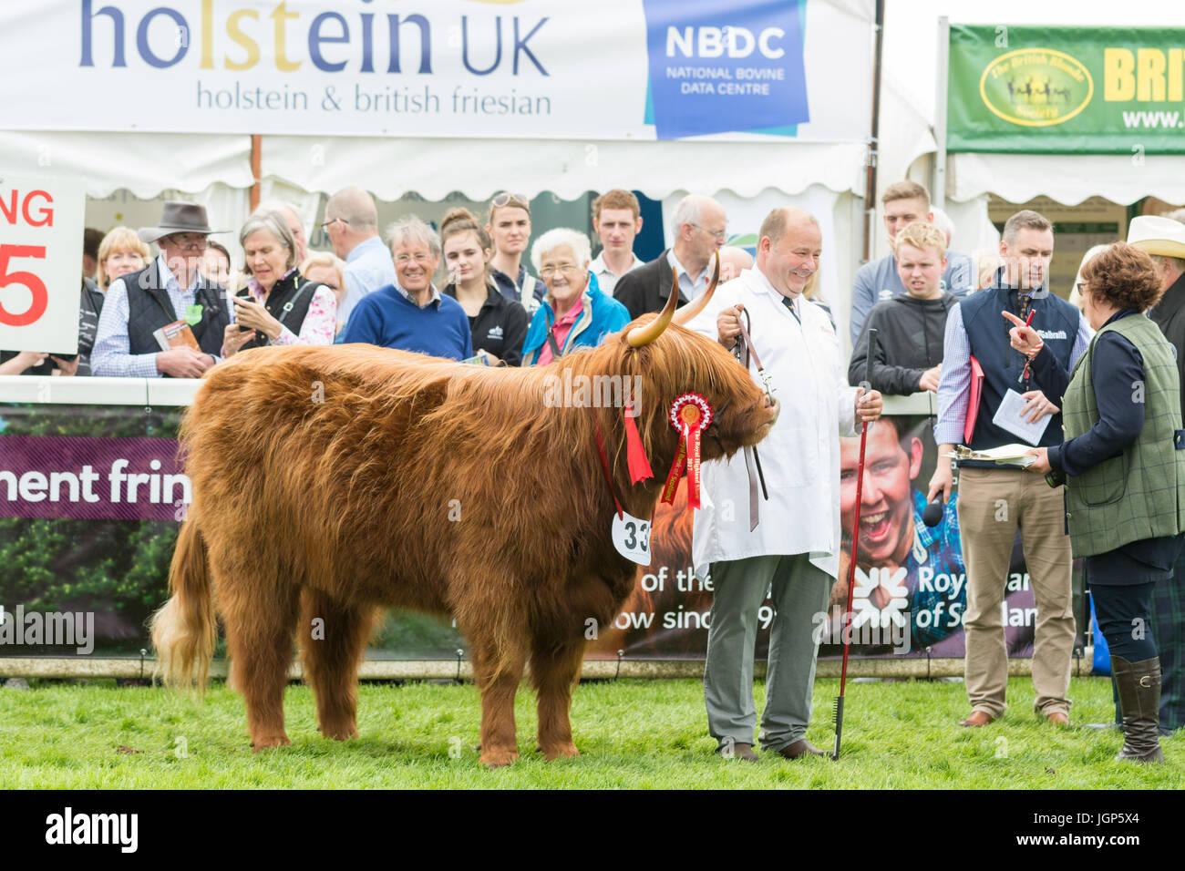 Highland Champion - Eleanor of Ubhaidh from Graeme Easton Ranch Livestock - of the 2017 Royal Highland Show, Ingliston, - Stock Image