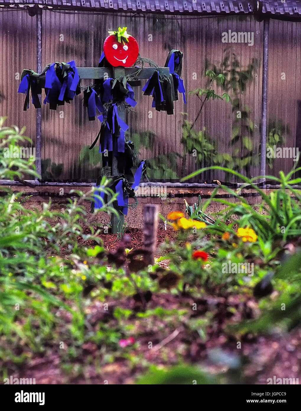 Scare crow in garden, colorful - Stock Image