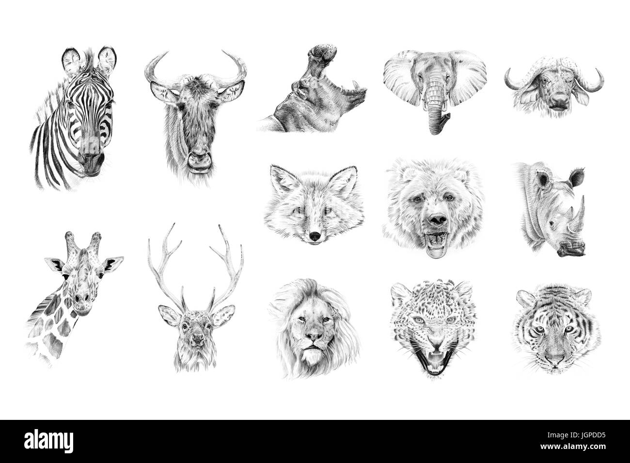 2864d4c66e6 Portrait of animals drawn by hand in pencil. Originals