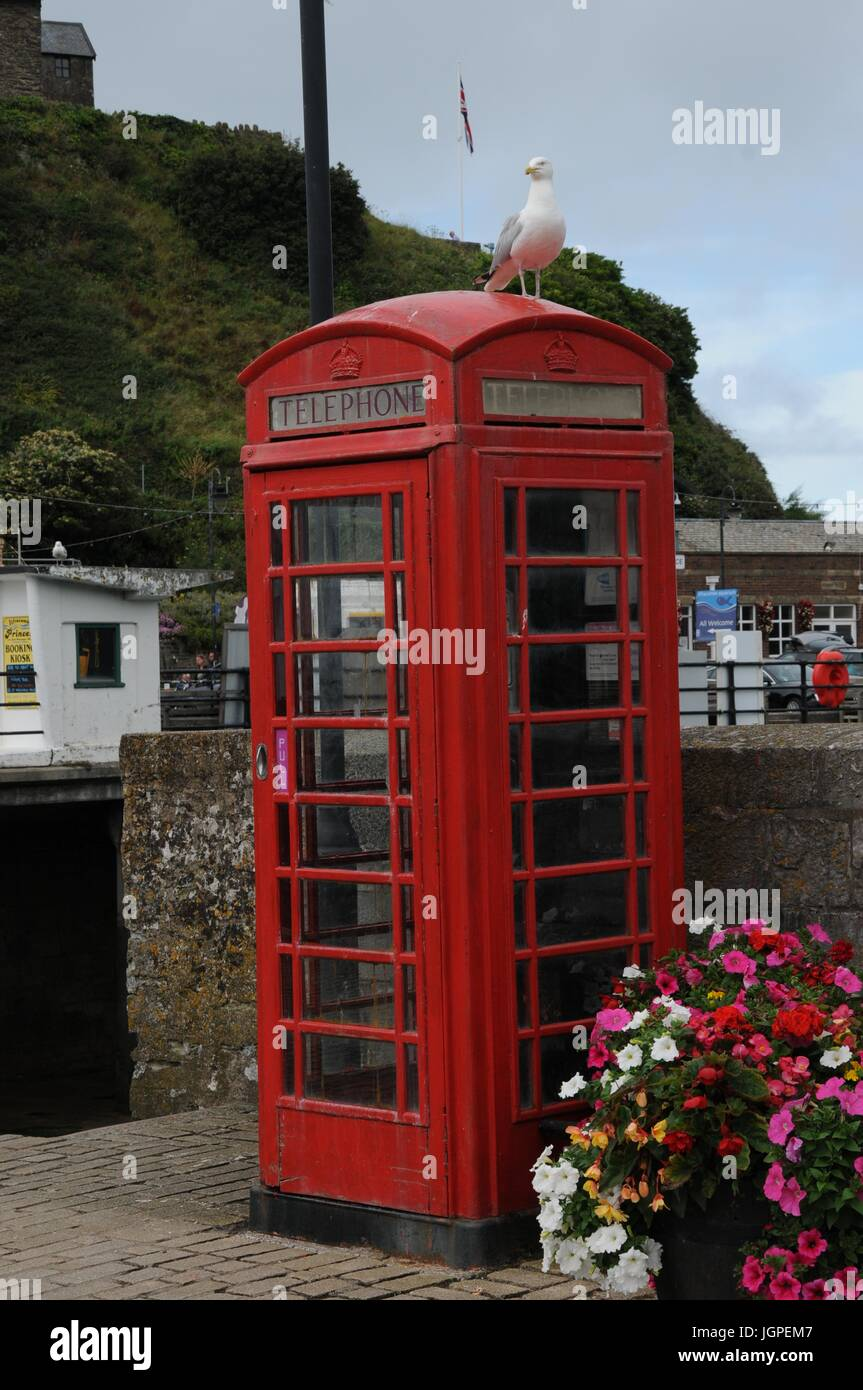 A seagull on a telephone kiosk in Ilfracome, Devon - Stock Image