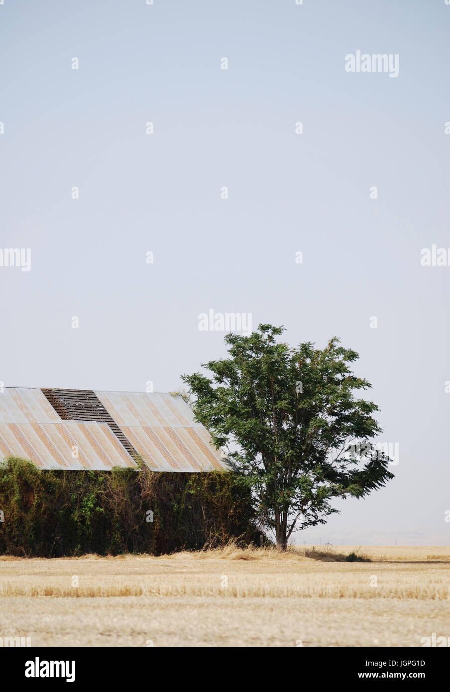Rustic Barn and pasture fields, Walla Walla Wa, USA Landscape in Summer - Stock Image
