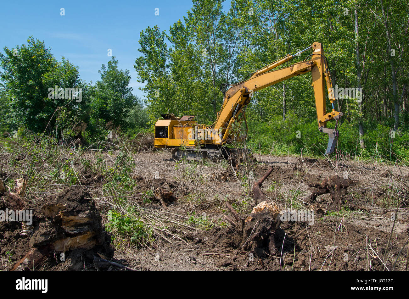 Deforestation of forest. Excavator used for digging logs and roots - Stock Image