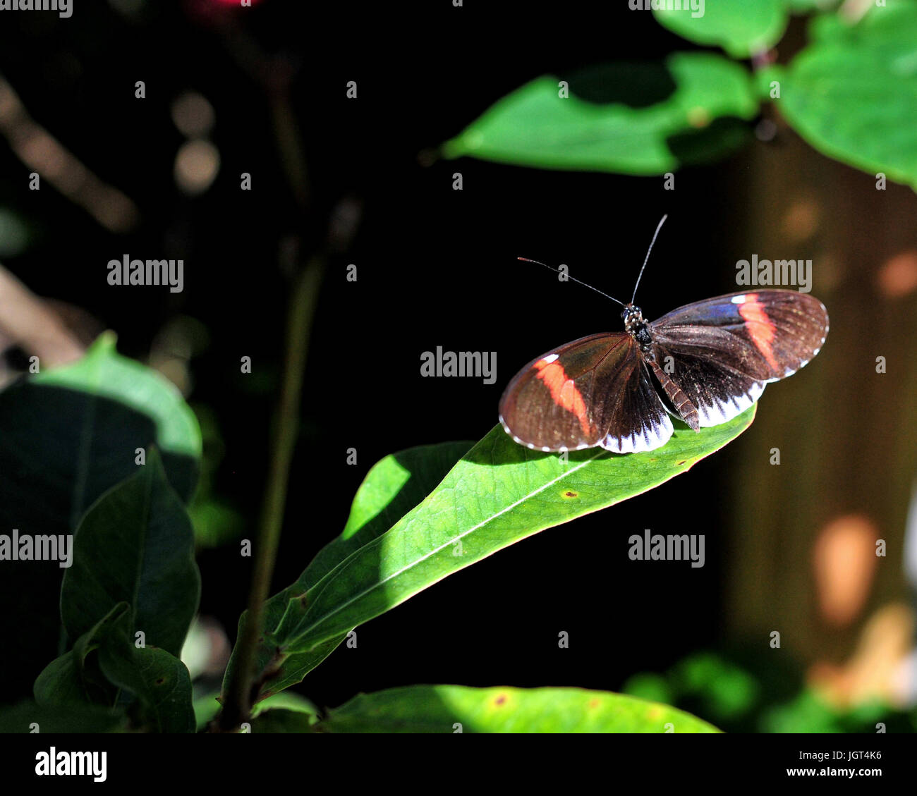 Moth on a branch - Stock Image