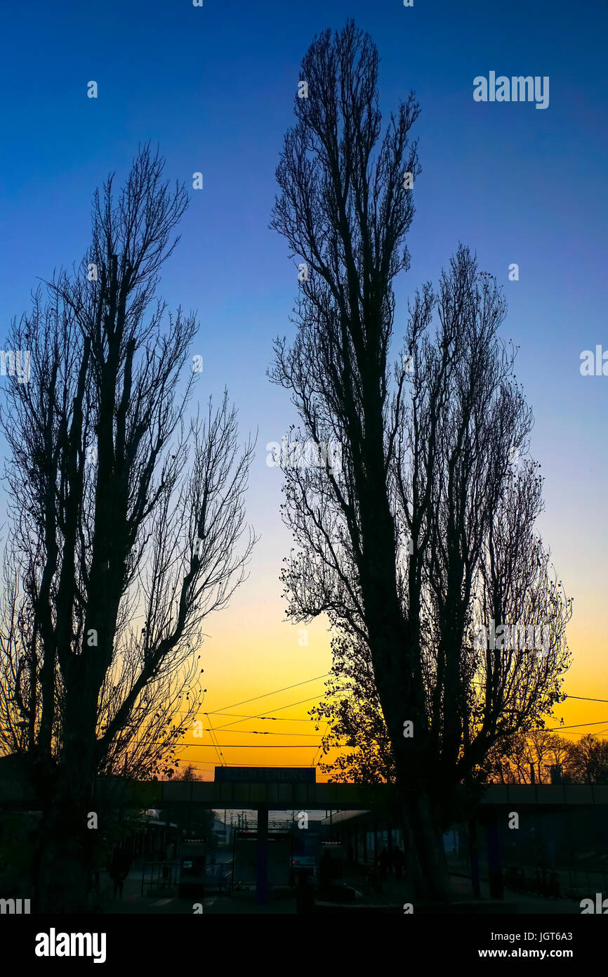 two deciduous trees at sunset - Stock Image