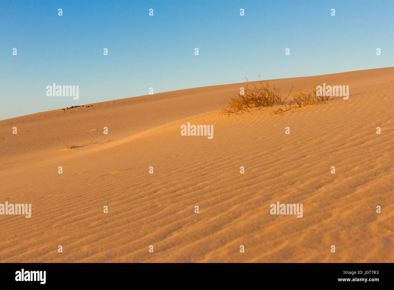 Divided photography on two part by sand and sky. Lands and panorama background. Sustainable ecosystem. Yellow dunes - Stock Image