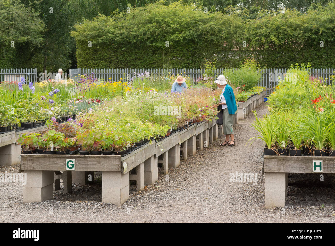 specialised perennial nursery - Breezy Knees Gardens, York, Yorkshire, England, UK - Stock Image