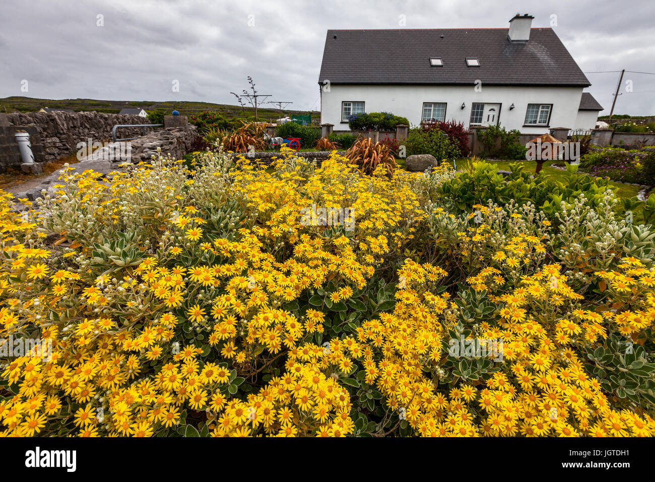 A Beautiful Garden Filled With Yellow Flowers On Inisheer One Of