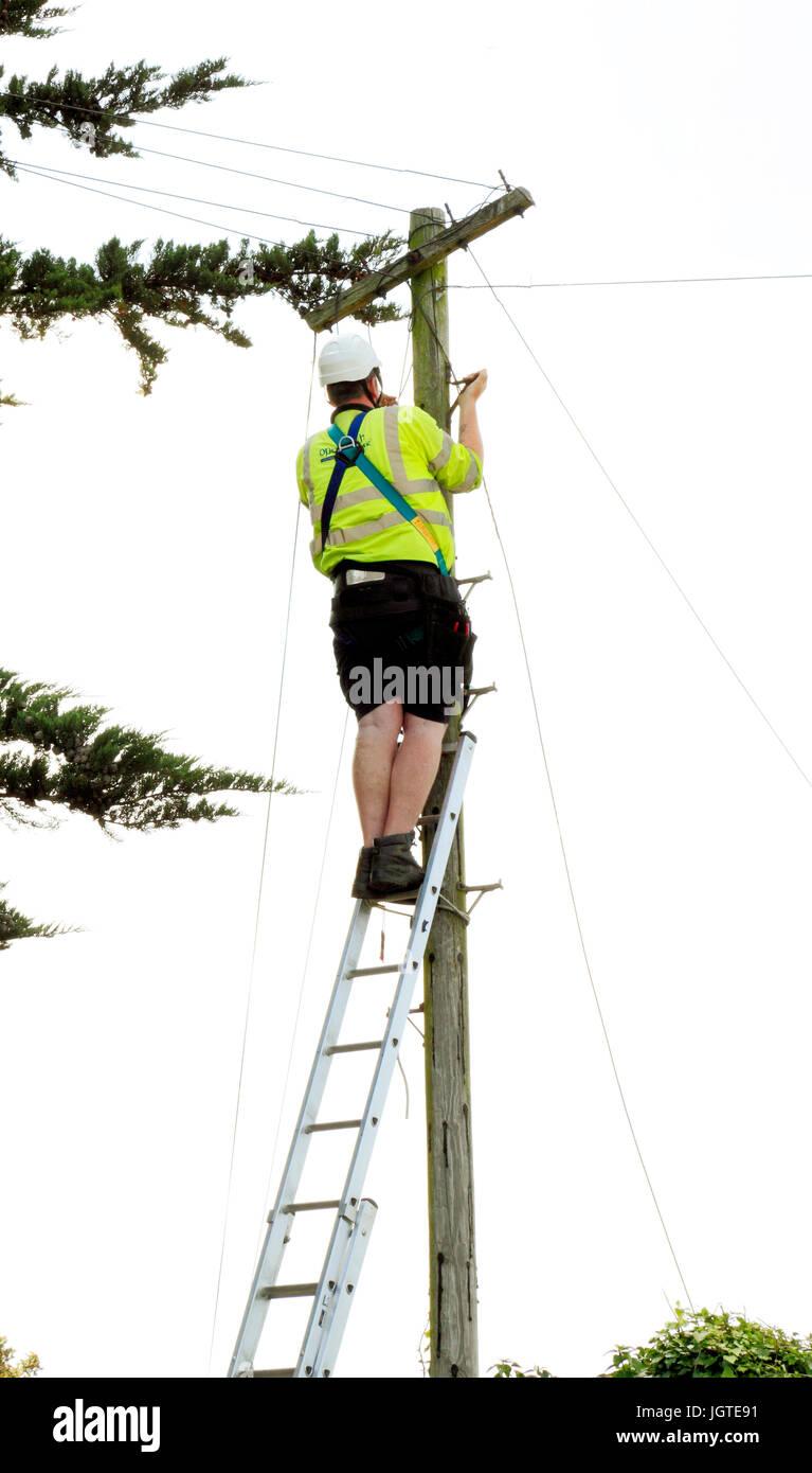 BT, Open Reach, British Telecom, engineer, working, telegraph pole, Norfolk, England UK - Stock Image